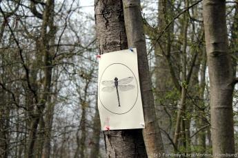Fantasy-LARP Verein - Wesen des Waldes 1 - 027